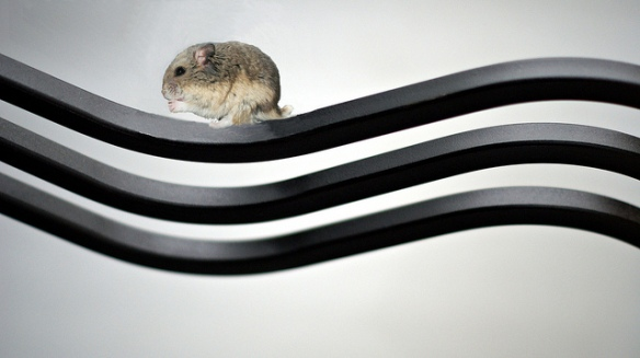 Hamster on a Wave