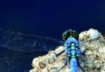 Dragonfly Iridescence